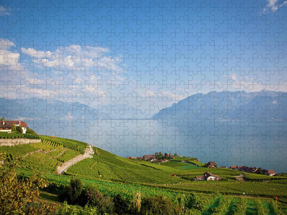 Alcohol Puzzle featuring the photograph Vineyards Around Lake Leman by Onfokus