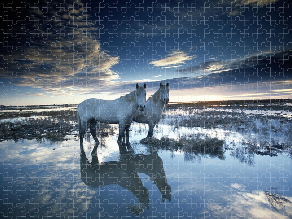 Horse Puzzle featuring the photograph Wild Horses Equus Caballus, France by Art Wolfe