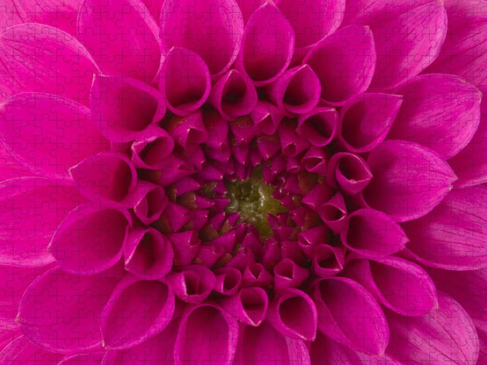 Saturated Color Puzzle featuring the photograph Dahlia by Vidok