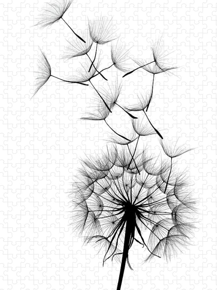 Wind Puzzle featuring the photograph Dandelion by Sunnybeach