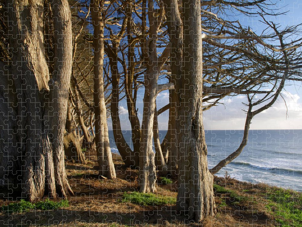 Tranquility Puzzle featuring the photograph Rustic Davenport Coast by Mitch Diamond