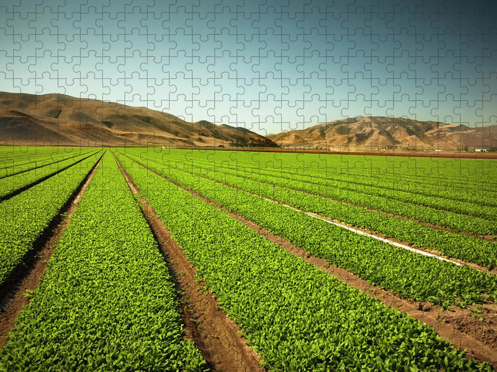 Environmental Conservation Puzzle featuring the photograph Crops Grow On Fertile Farm Land by Pgiam