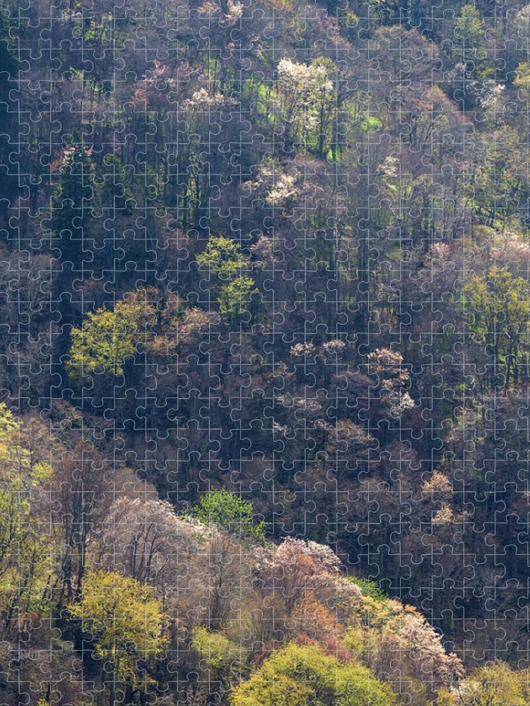 Scenics Puzzle featuring the photograph Early Spring, North Carolina by Jerry Whaley