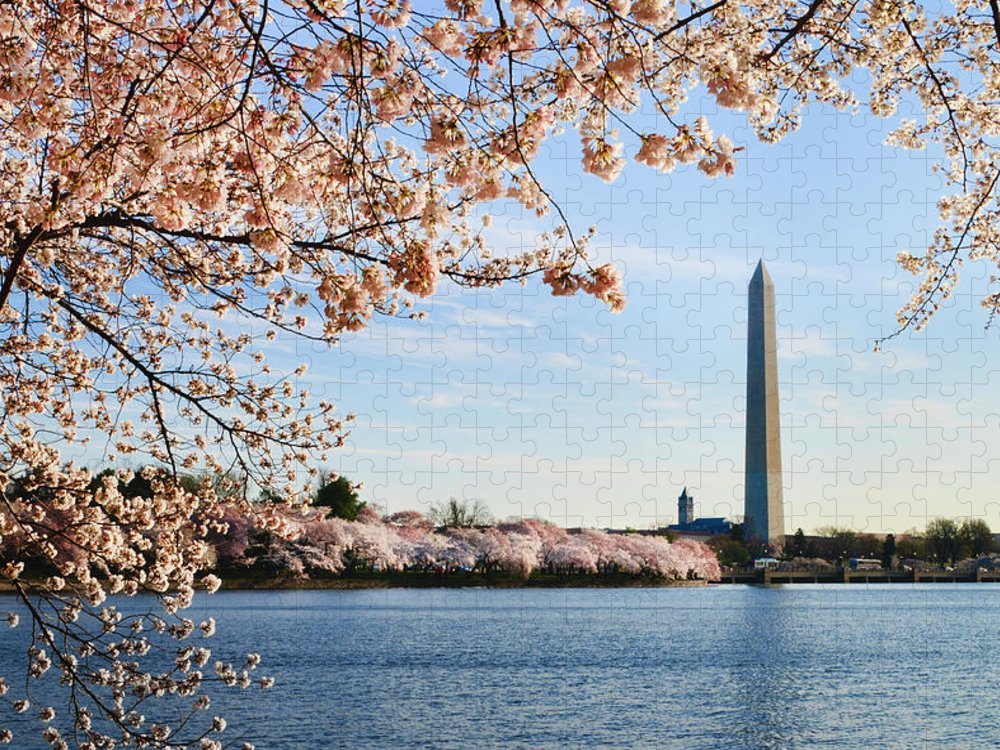 Tidal Basin Puzzle featuring the photograph Washington Dc Cherry Blossoms And by Ogphoto