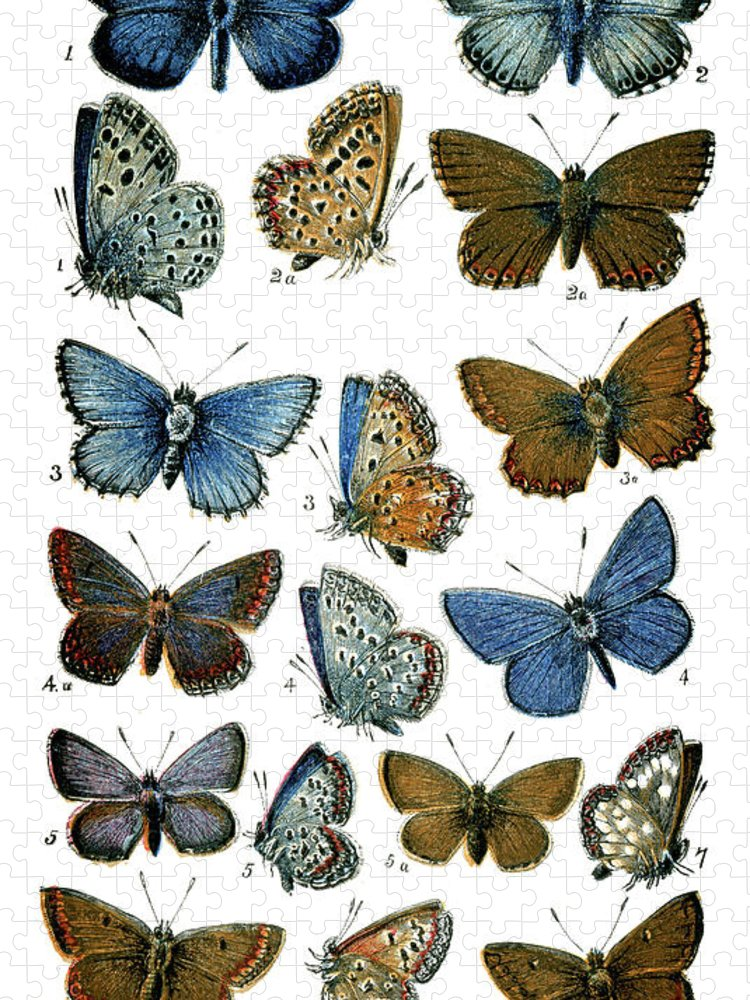 Common Blue Butterfly Puzzle featuring the digital art Butterflies by Duncan1890
