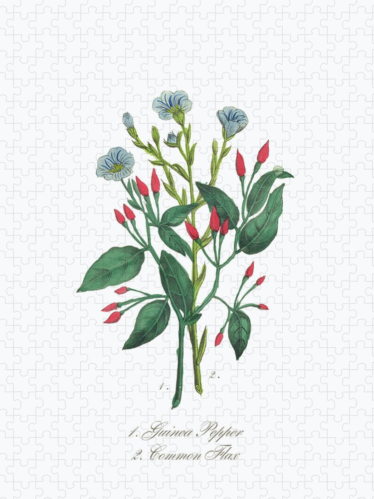 White Background Puzzle featuring the digital art Victorian Botanical Illustration Of by Bauhaus1000