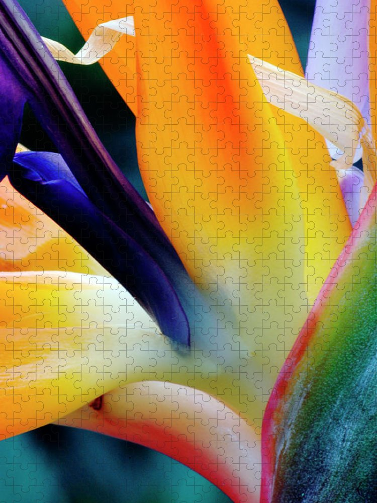 Banana Tree Puzzle featuring the photograph A Close-up Of A Flower Of A Bird Of by Eromaze