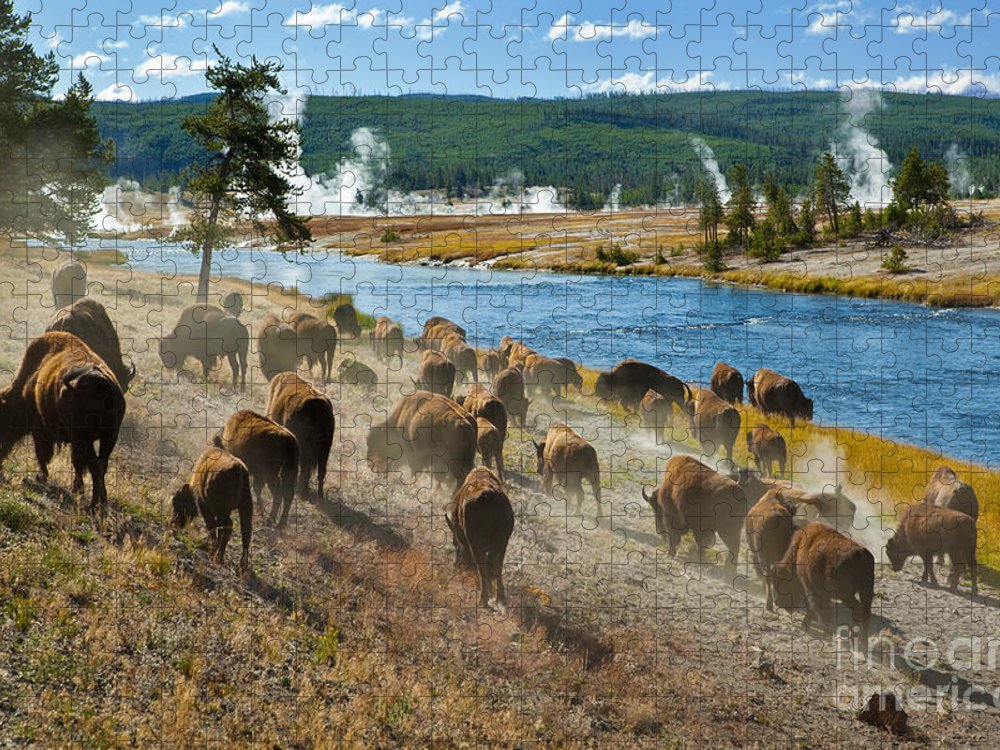 Fur Puzzle featuring the photograph A Herd Of Bison Moves Quickly by Lee Prince