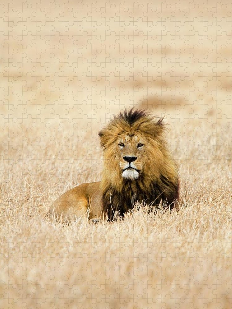 Grass Puzzle featuring the photograph A Lion by Sean Russell