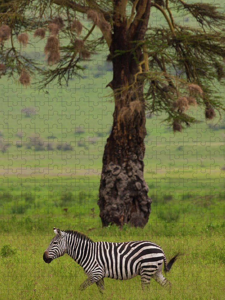 Plains Zebra Puzzle featuring the photograph A Plains Zebra In Ngorongoro by Mint Images - Art Wolfe