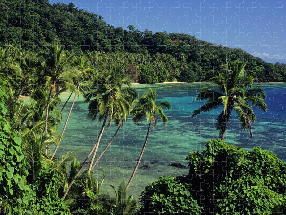Tropical Rainforest Puzzle featuring the photograph A Tropical Paradise Of A Beach And Palm by Tammy616