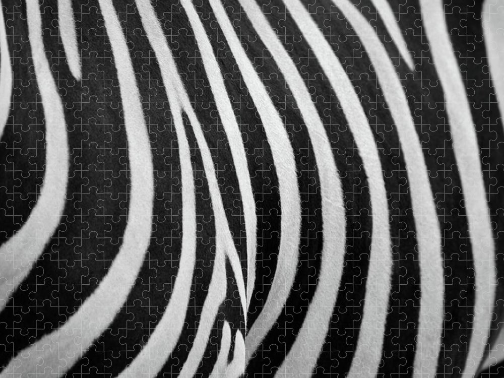 Animal Themes Puzzle featuring the photograph Abstraction Zebra by Rashed Alsikhan