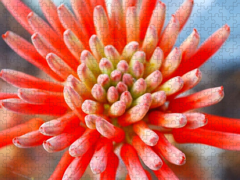 Plant Attribute Puzzle featuring the photograph Aloe Flower by Lazingbee