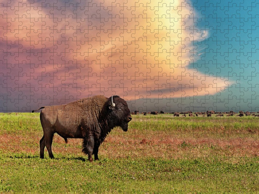 Horned Puzzle featuring the photograph American Bison At Sunset by Mike Hill