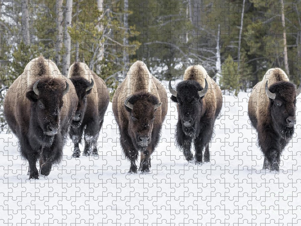 Usa Puzzle featuring the photograph American Bison by David Osborn