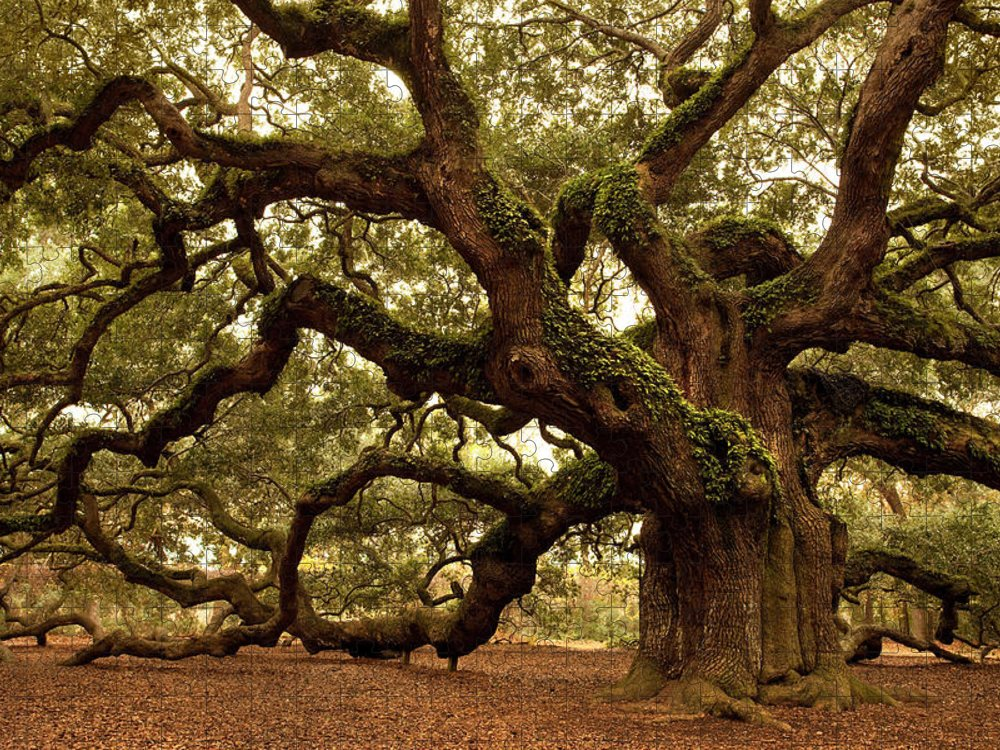 Southern Usa Puzzle featuring the photograph Ancient Angel Oak Near Charleston by Pgiam