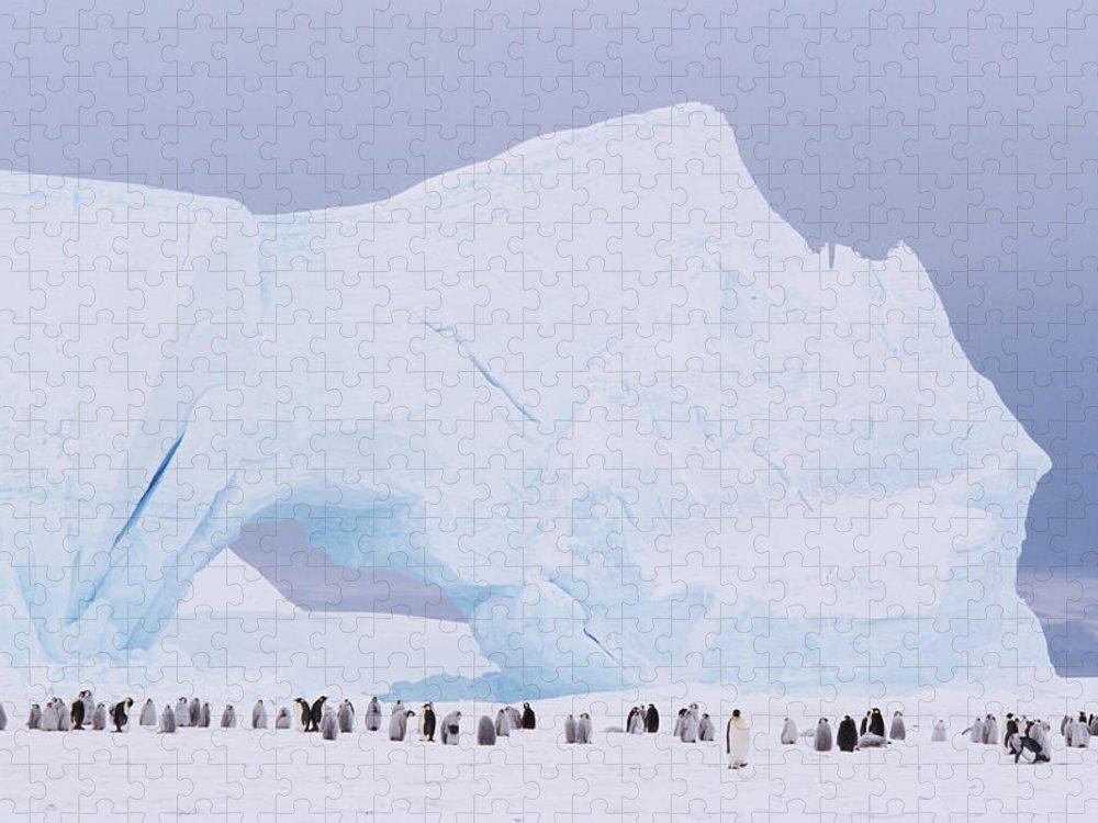 Emperor Penguin Puzzle featuring the photograph Antarctica, Emperor Penguin Aptenodytes by Joseph Van Os