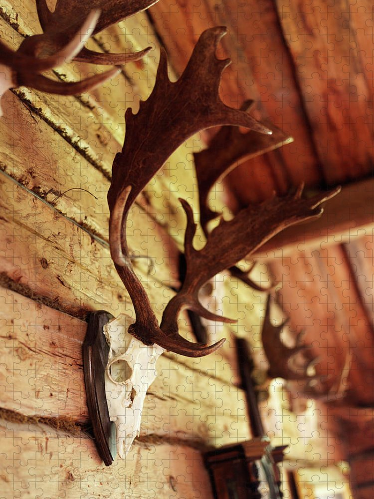 Horned Puzzle featuring the photograph Antler Collection On Wall by Granefelt, Lena