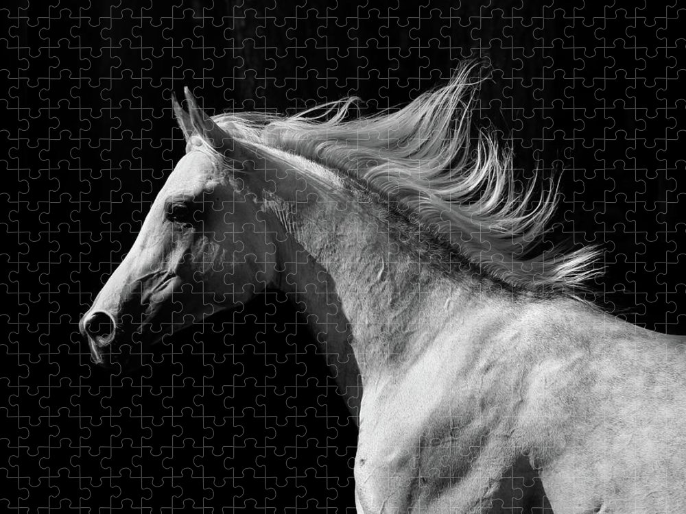 Horse Puzzle featuring the photograph Arab Stallion by Photographs By Maria Itina