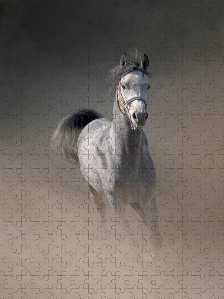 Horse Puzzle featuring the photograph Arabian Horse Running Through Dust by Christiana Stawski