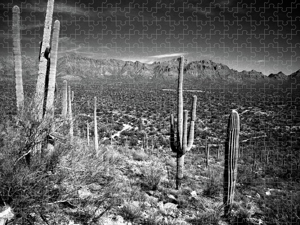Saguaro Cactus Puzzle featuring the photograph Arizona, Tucson, Saguaro Np, Brown by James Denk