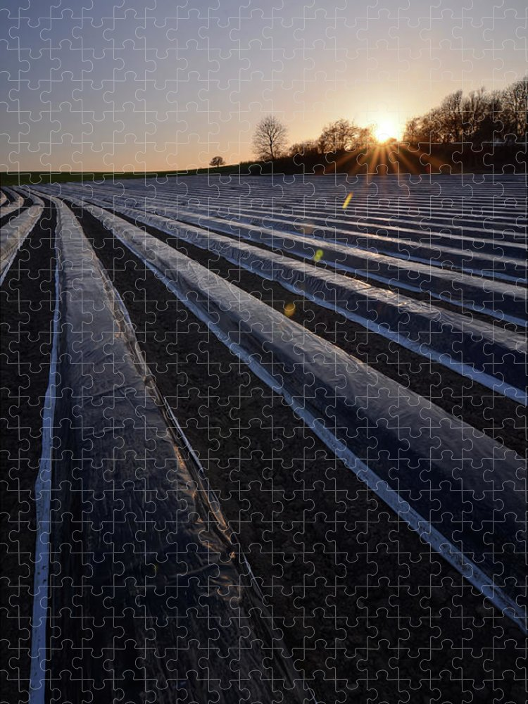 Tranquility Puzzle featuring the photograph Asparagus Field by Andy Brandl