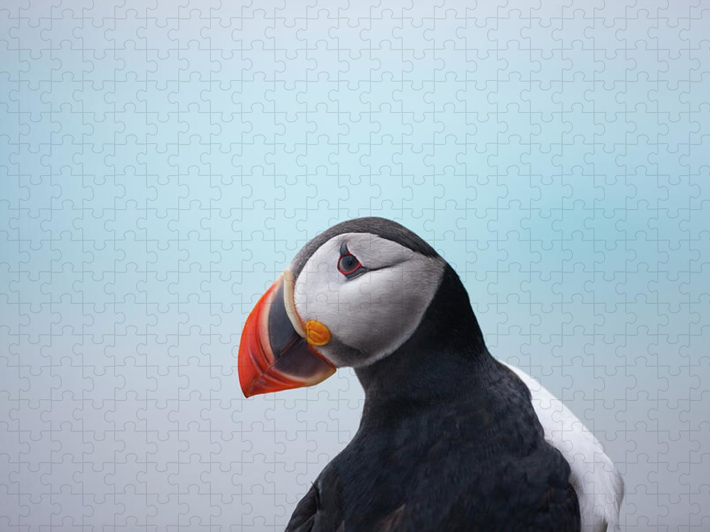 Svalbard Islands Puzzle featuring the photograph Atlantic Puffin, Svalbard, Norway by Paul Souders