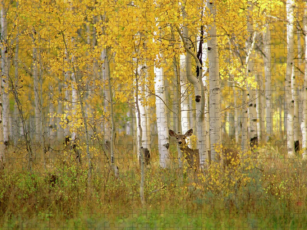 Vertebrate Puzzle featuring the photograph Autumn In Uinta National Forest. A Deer by Mint Images - David Schultz