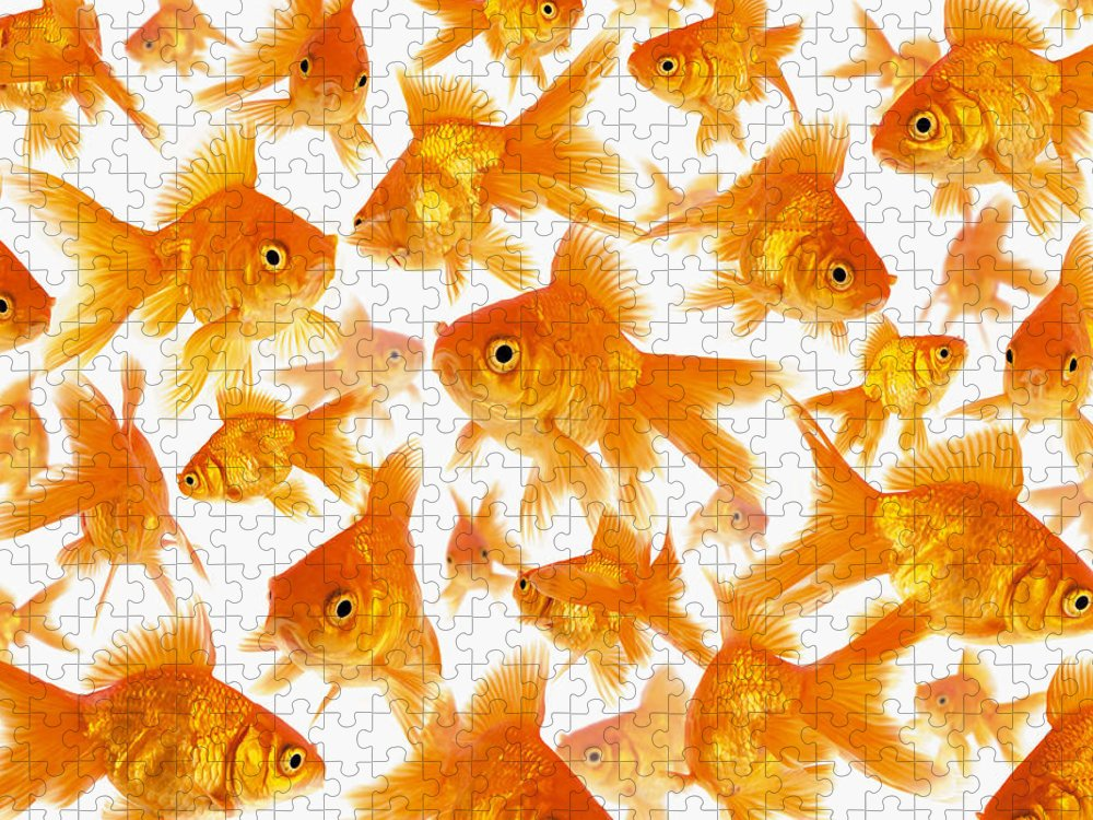 Orange Color Puzzle featuring the photograph Background Showing A Large Group Of by Cocoon