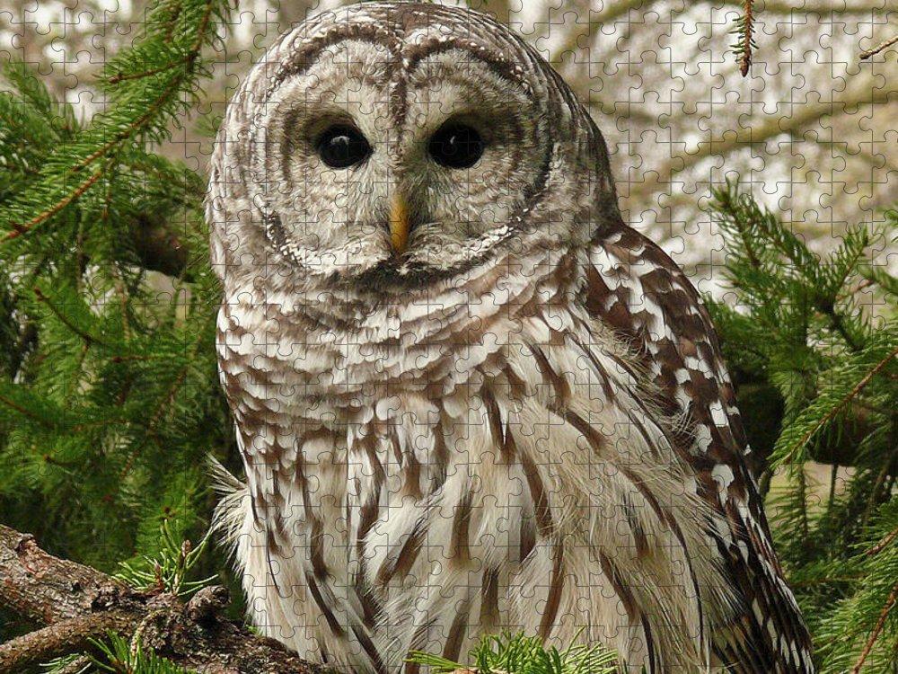 Animal Themes Puzzle featuring the photograph Barred Owl by Karen Von Knobloch Photographerkaren