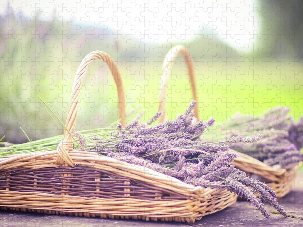 Dorset Puzzle featuring the photograph Baskets Of Lavender by Sasha Bell