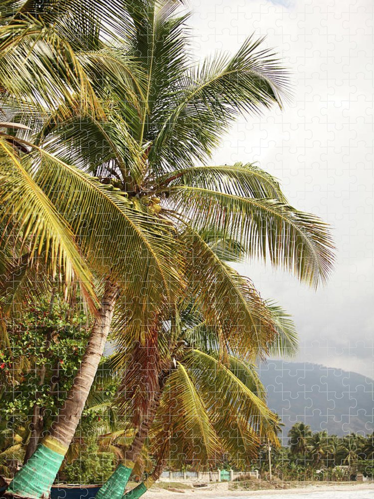 Tropical Tree Puzzle featuring the photograph Beach In Haiti by 1001nights