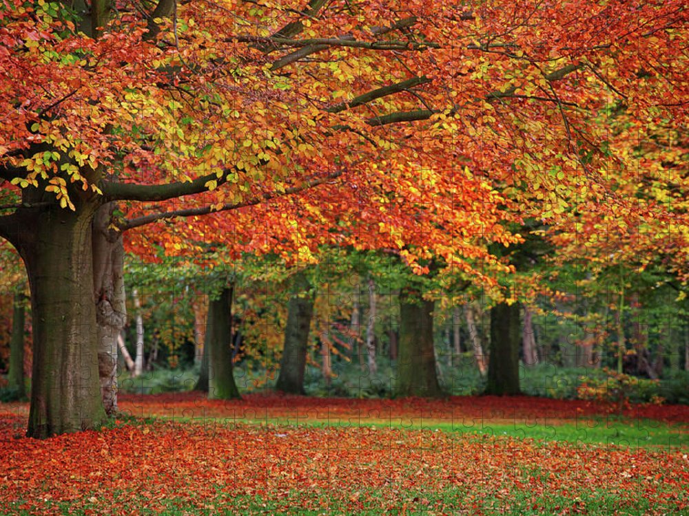 Orange Color Puzzle featuring the photograph Beautiful Autumn In Park by Lorado