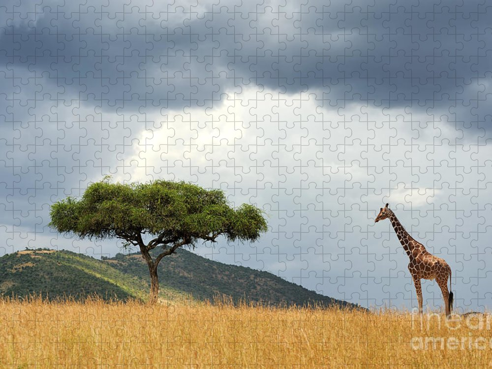 Safari Puzzle featuring the photograph Beautiful Landscape With Nobody Tree by Volodymyr Burdiak