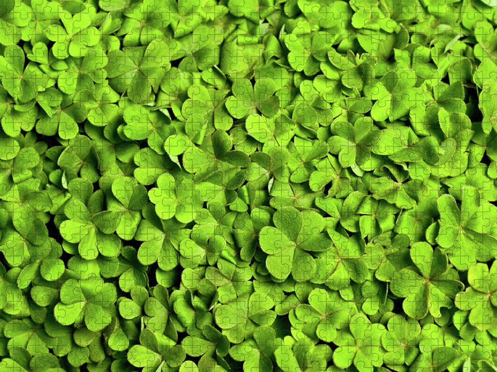 Leaf Puzzle featuring the photograph Bed Of Clover by Kledge