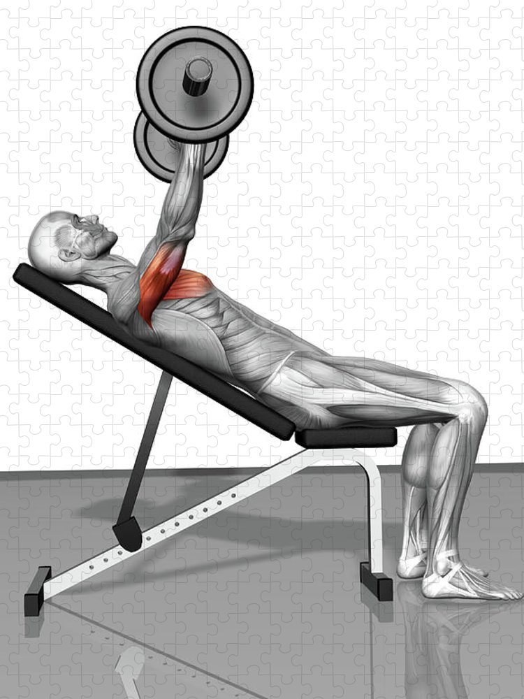 Barbell Puzzle featuring the digital art Bench Press Incline Part 1 Of 2 by Medicalrf.com