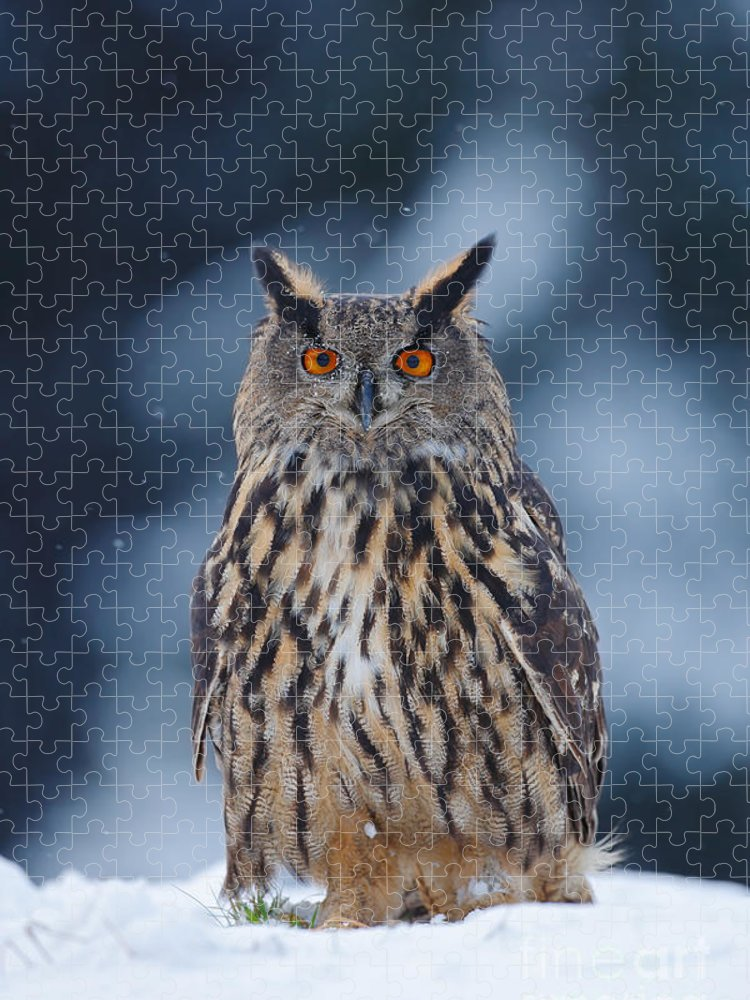 Big Puzzle featuring the photograph Big Eurasian Eagle Owl With Snowflakes by Ondrej Prosicky