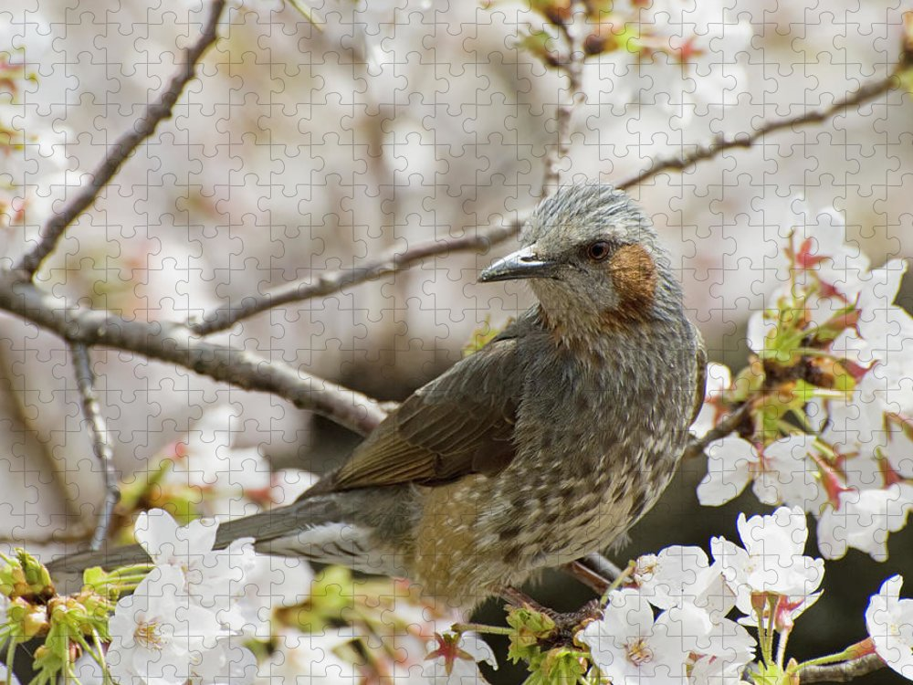 Alertness Puzzle featuring the photograph Bird Perched Among Cherry Blossoms by Philippe Widling / Design Pics