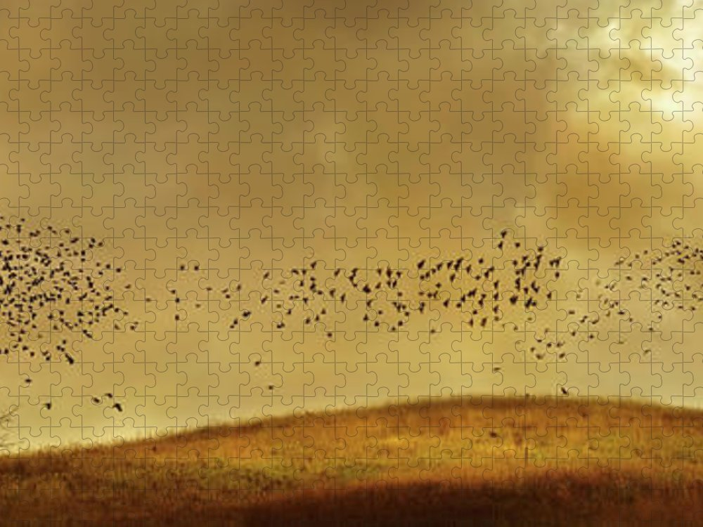Tranquility Puzzle featuring the photograph Birds Flying To Bare Tree In Rural by Chris Clor