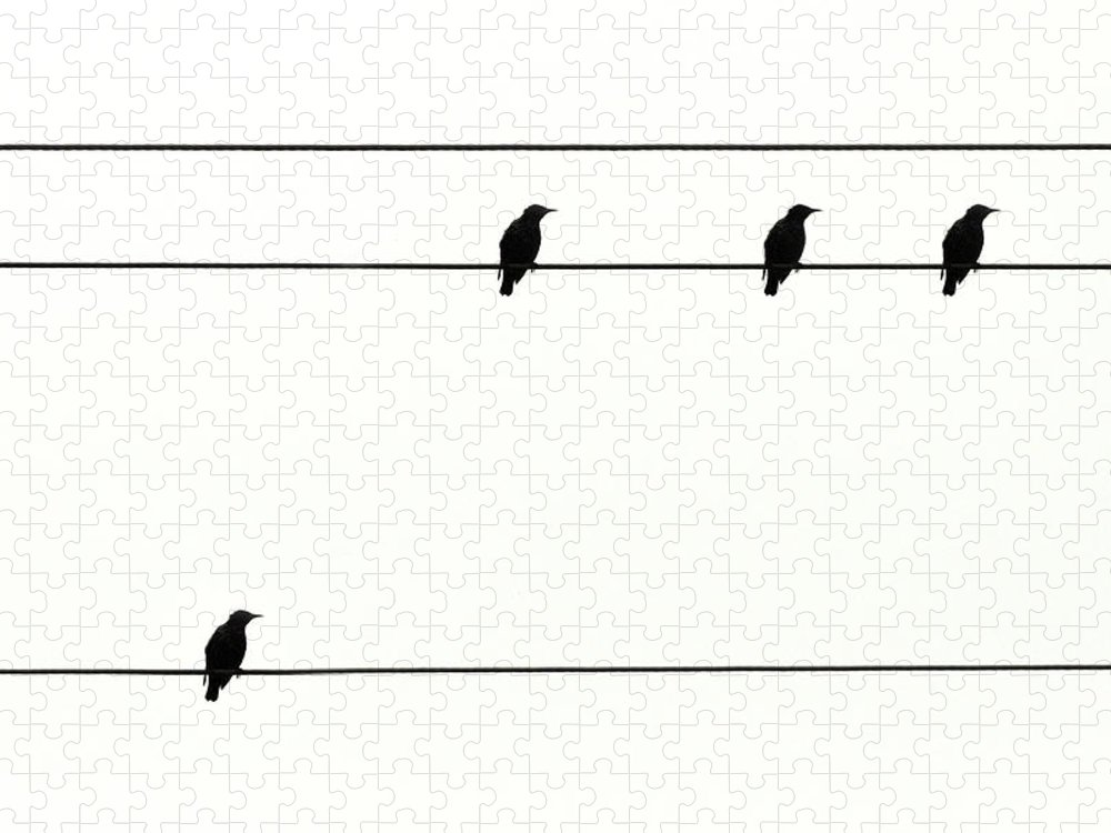 In A Row Puzzle featuring the photograph Birds On Power Lines by Kees Smans