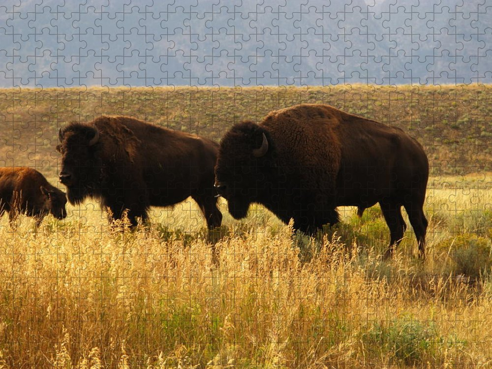 Non-moving Activity Puzzle featuring the photograph Bison Buffalo Family by Sassy1902