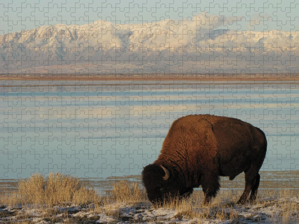 Grass Puzzle featuring the photograph Bison In Front Of Snowy Mountains by Mathew Levine