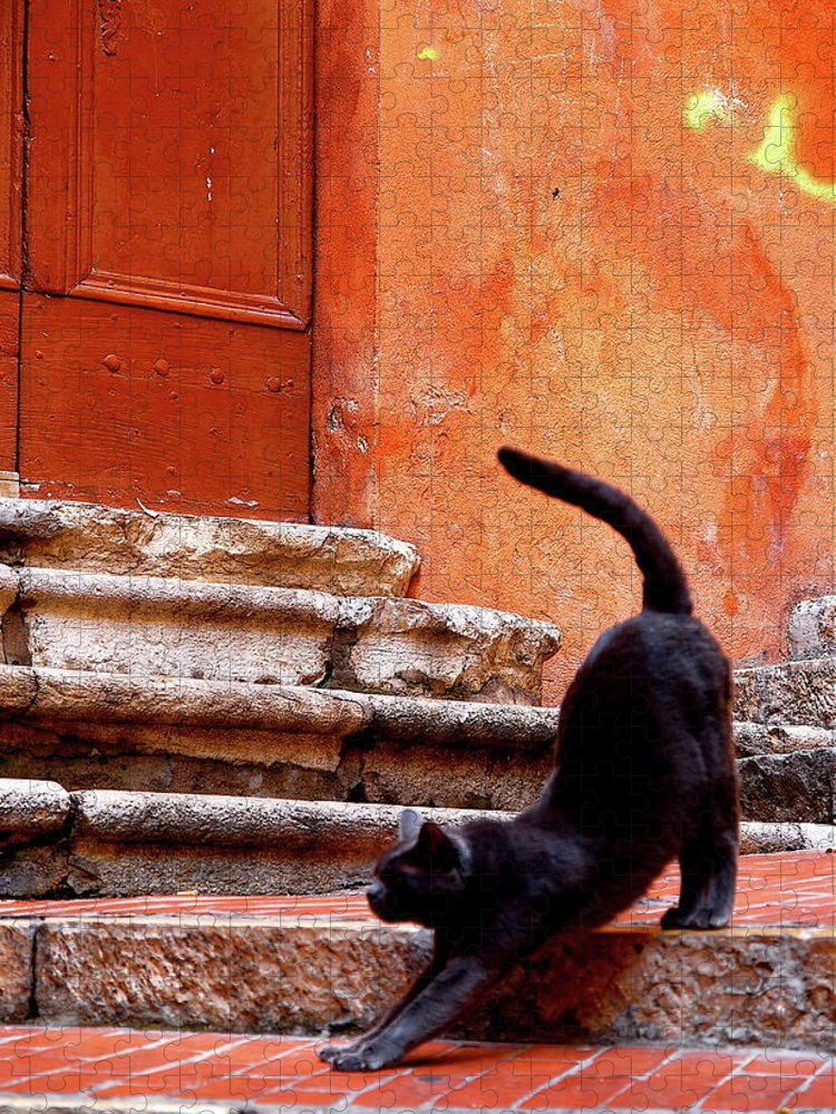 Steps Puzzle featuring the photograph Black Cat by Roy Cheung