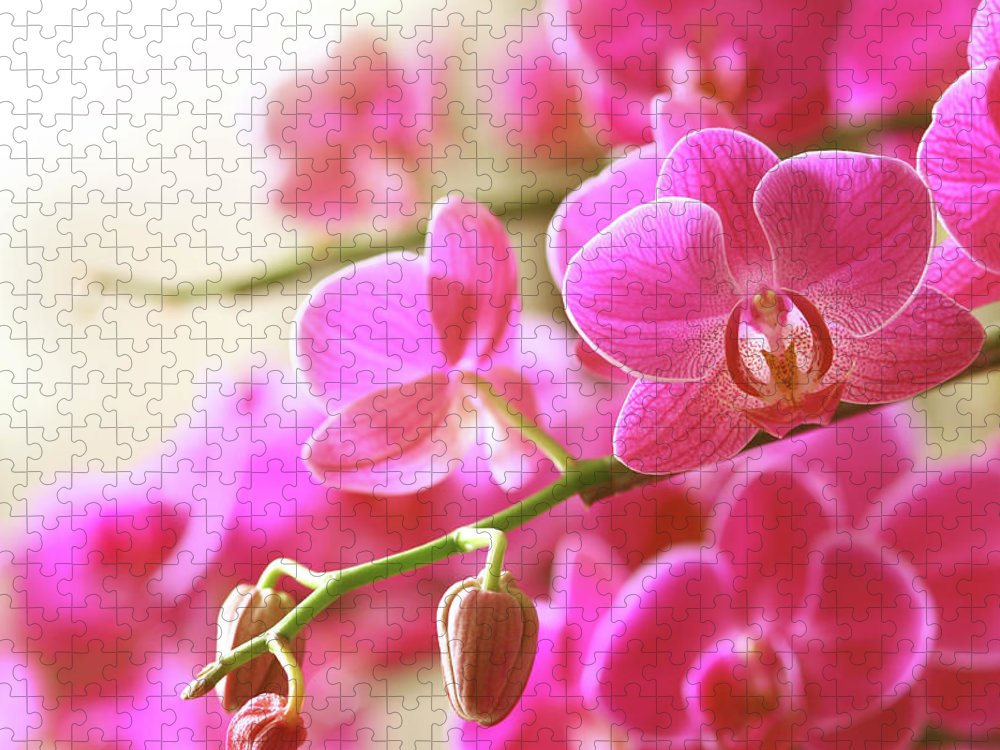 Environmental Conservation Puzzle featuring the photograph Blooming Pink Orchid On A Green Branch by Dreaming2004