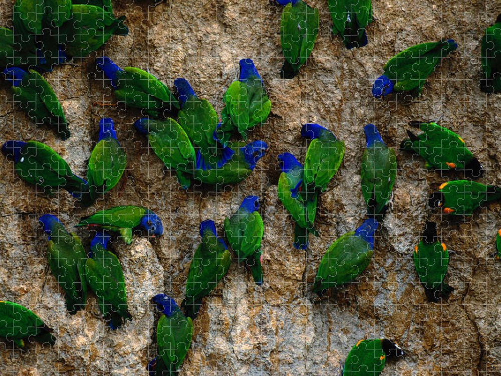Blue Headed Parrot Puzzle featuring the photograph Blue-headed And Barrabands Parrots by Art Wolfe