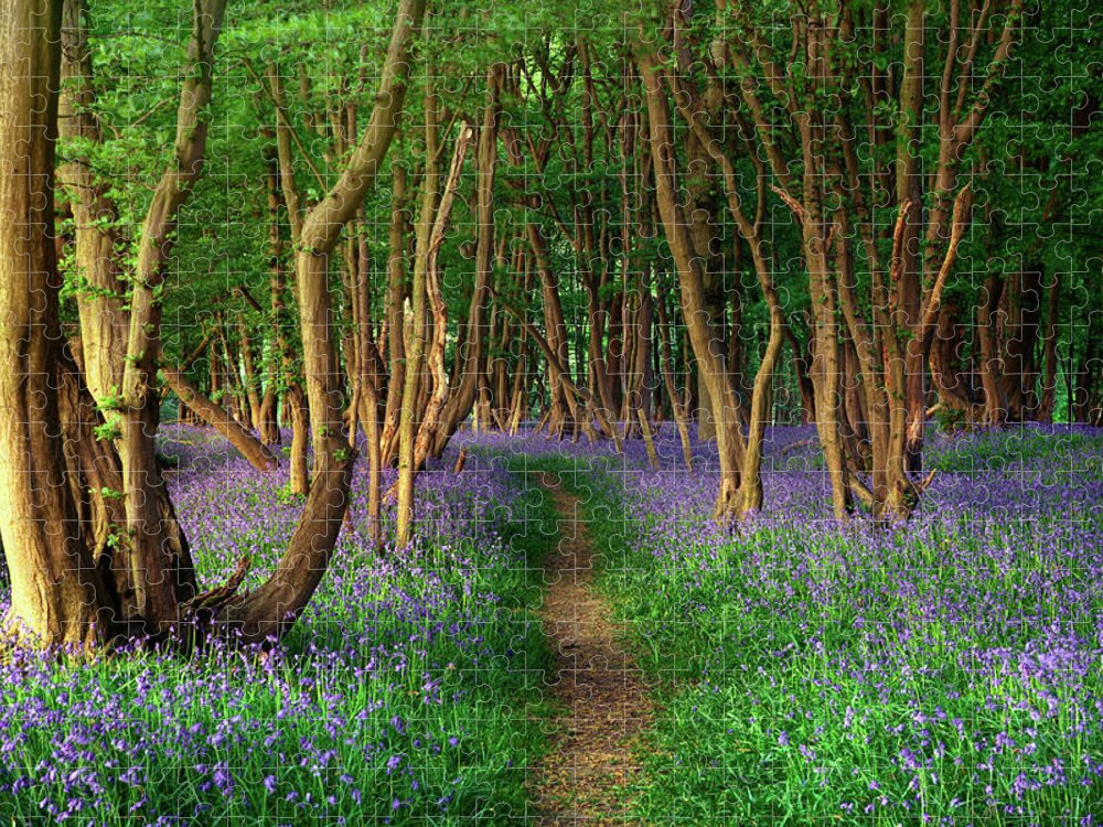 Tranquility Puzzle featuring the photograph Bluebells In Sussex by Photography By Sam C Moore
