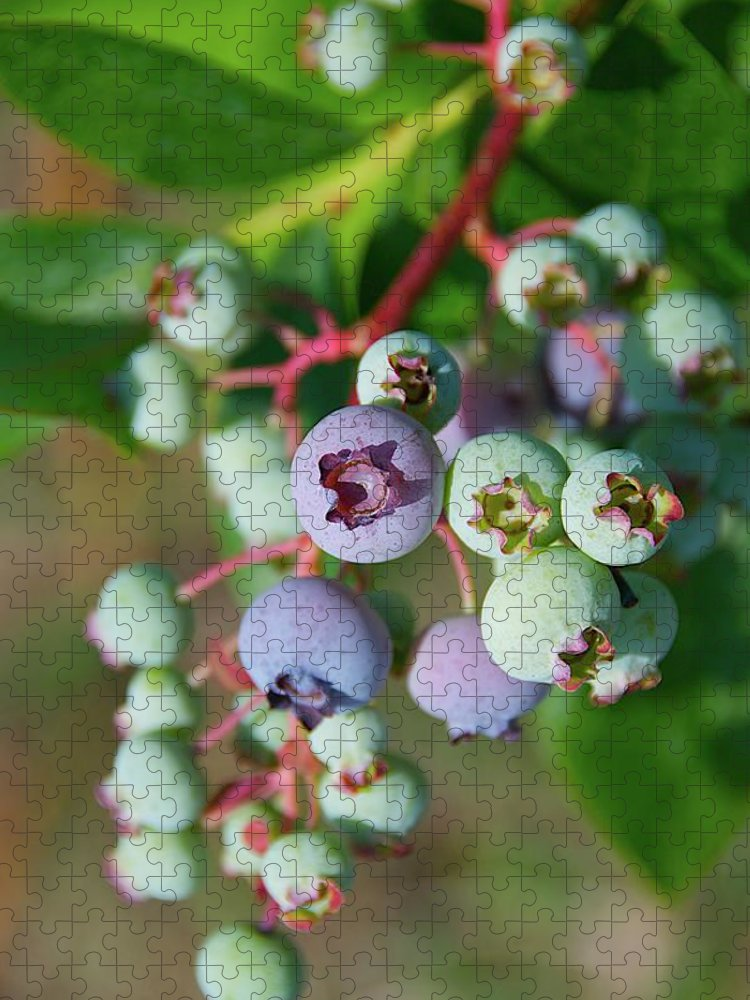 Large Group Of Objects Puzzle featuring the photograph Blueberries by ©howd, Howard Lau