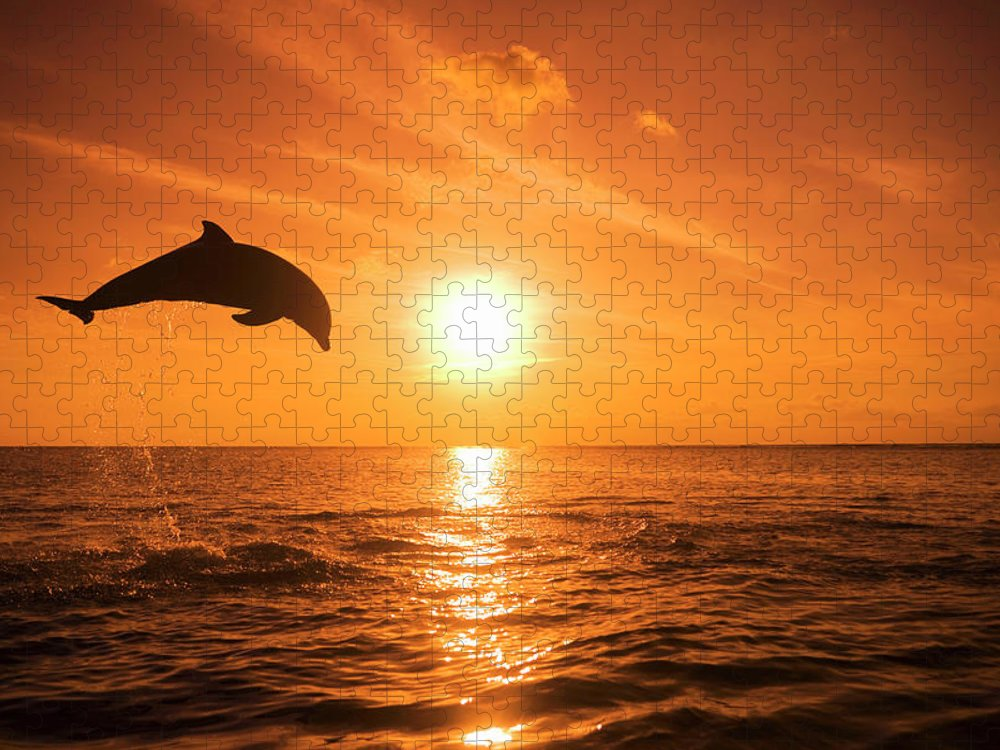Orange Color Puzzle featuring the photograph Bottlenose Dolphin Tursiops Truncatus by Rene Frederick