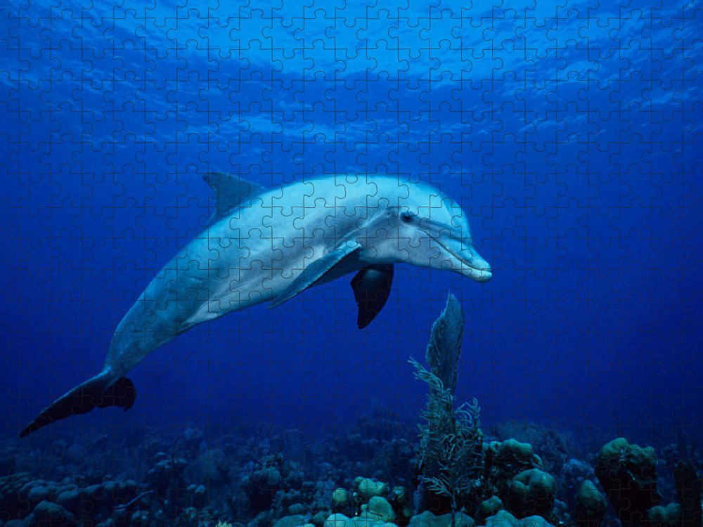 Underwater Puzzle featuring the photograph Bottlenose Dolphin,tursiops by Gerard Soury