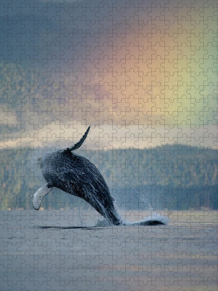 Animal Themes Puzzle featuring the photograph Breaching Humpback Whale And Rainbow by Paul Souders